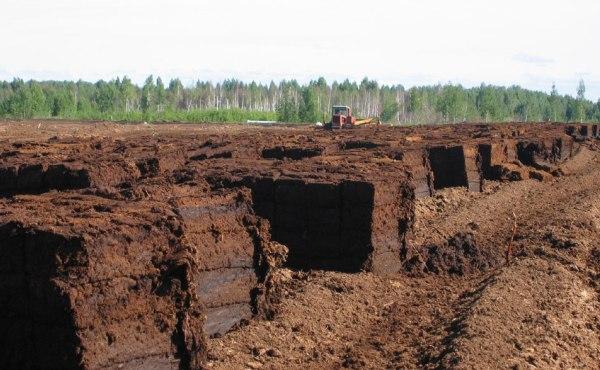 Добыча торфа в Великом Новгороде