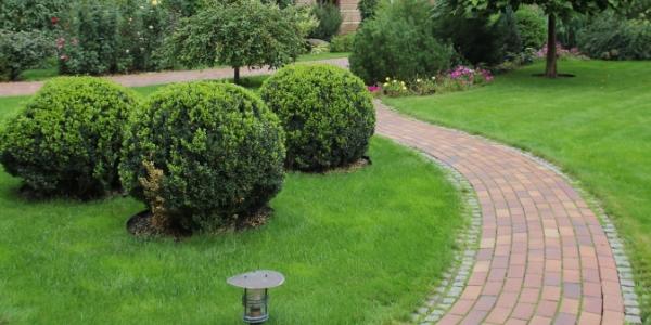 Дорога по саду